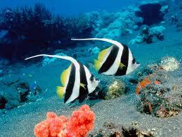 SeaBel