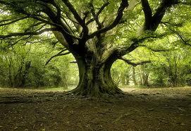 TreeAlif